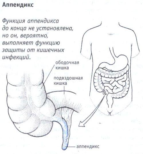appendicit-0 (1)