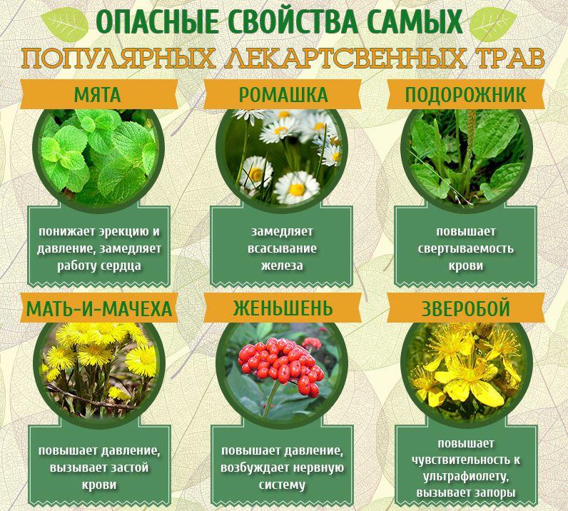 Какие лекарственные травы нельзя котегарически употреблять при беременности