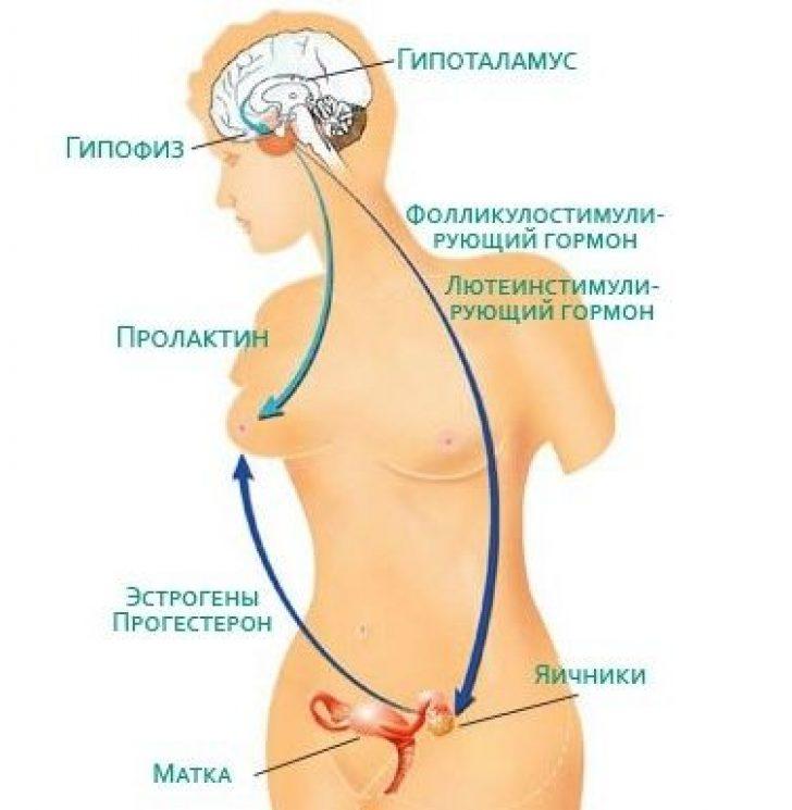 Гормональное бесплодие у женщин лечение