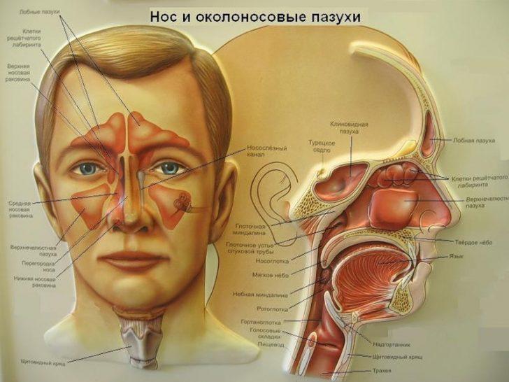 Kakie-oslozhneniya-poyavlyayutsya-pri-gaymorite