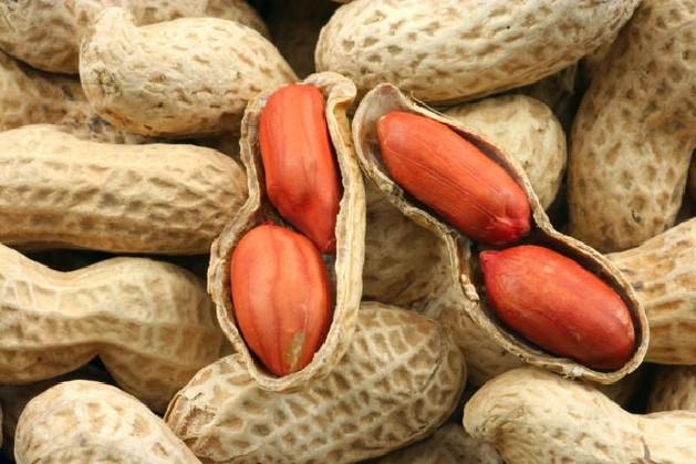 арахис-земляной-орех-e1366885097203