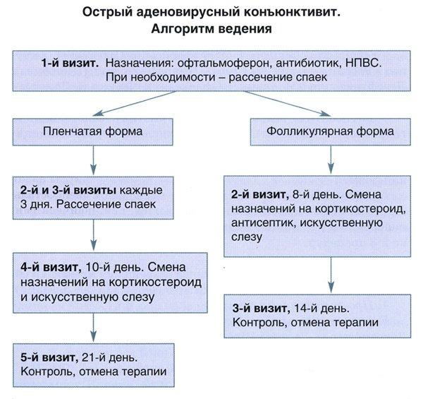 42895-kuda-delat-ukol-diklofenaka-sobake