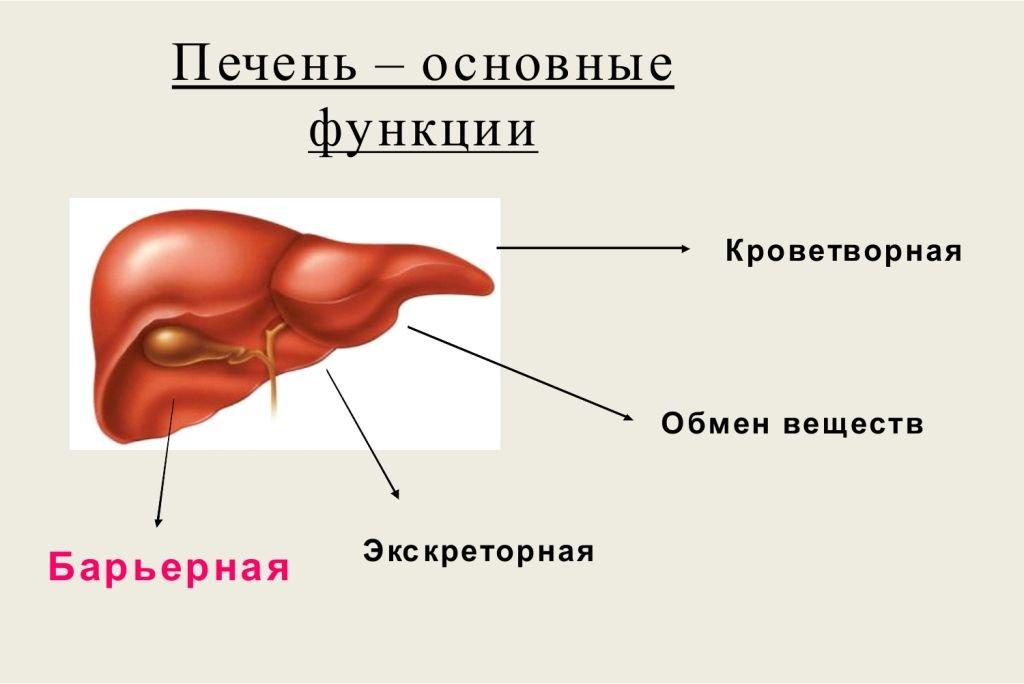63527-aktualnost-temy-izucheniya-gepatitov