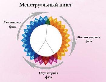 fazy-menstrualnogo-tsikla