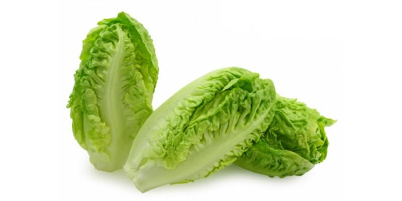 pic_lettuce1