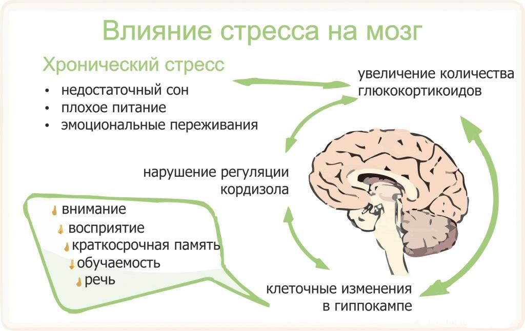 Стресс причины развития признаки стадии прогрессирования   стресса заканчивается развитием остеопороза vliyanie stressa na mozg