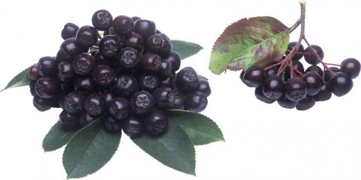 Черноплодная арония (рябина)