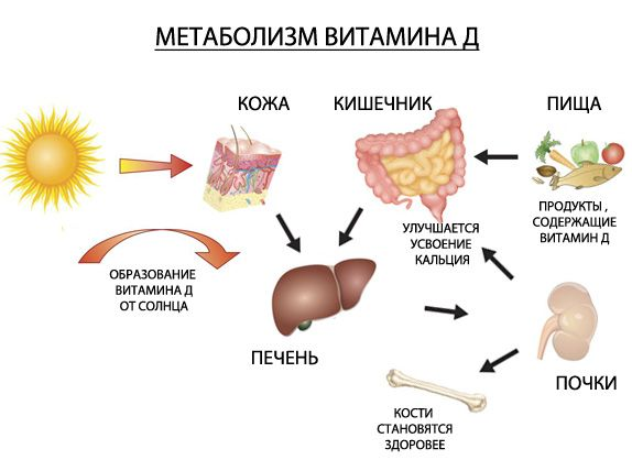 от низкий холестерин