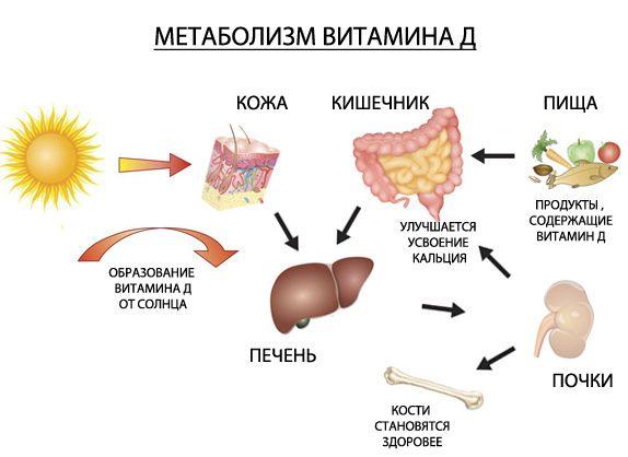 Витамин д для чего нужен организму