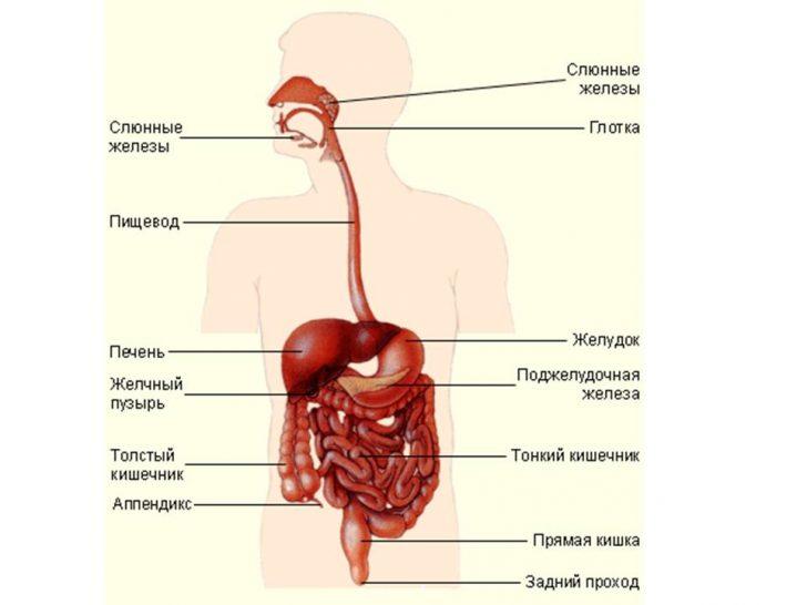 Причины возникновения диспепсии