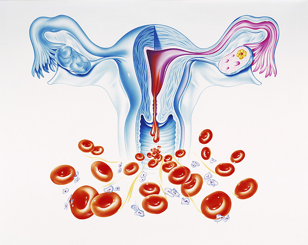 1-menstruation-john-bavosi