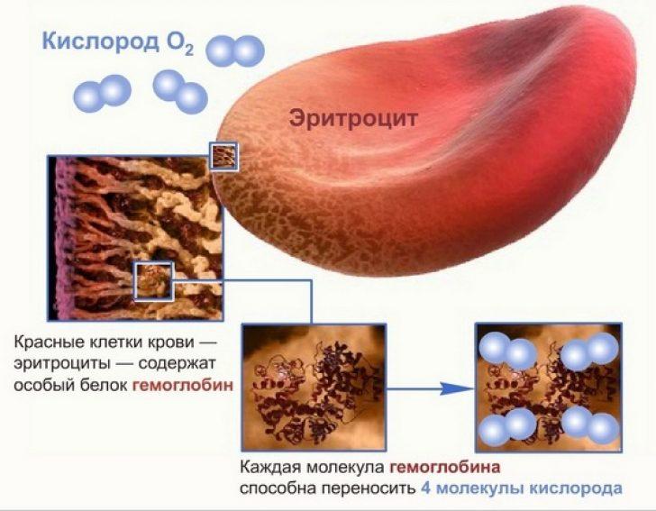 Гемоглобин и рост волос