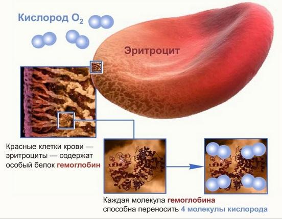 гемоглобин увеличенный