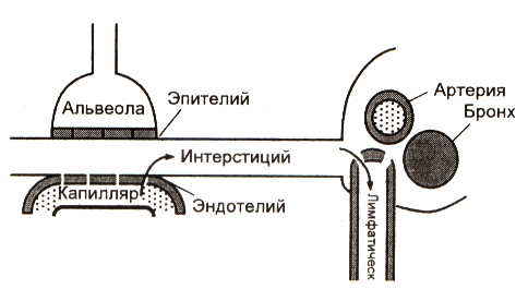 Obmen-zhidkosti-v-legkikh