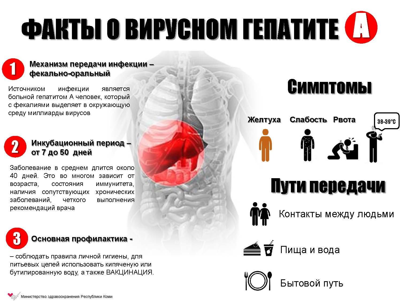 Гепатит с болит печень форум