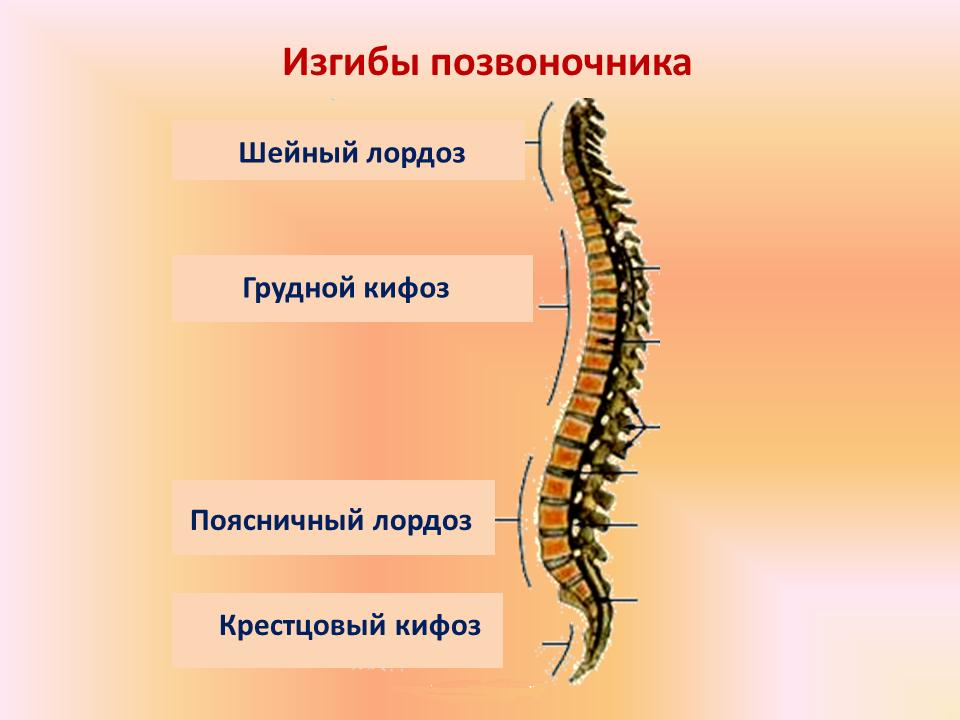 Сколиоз у детей: признаки и лечение, диагностика и профилактика ...