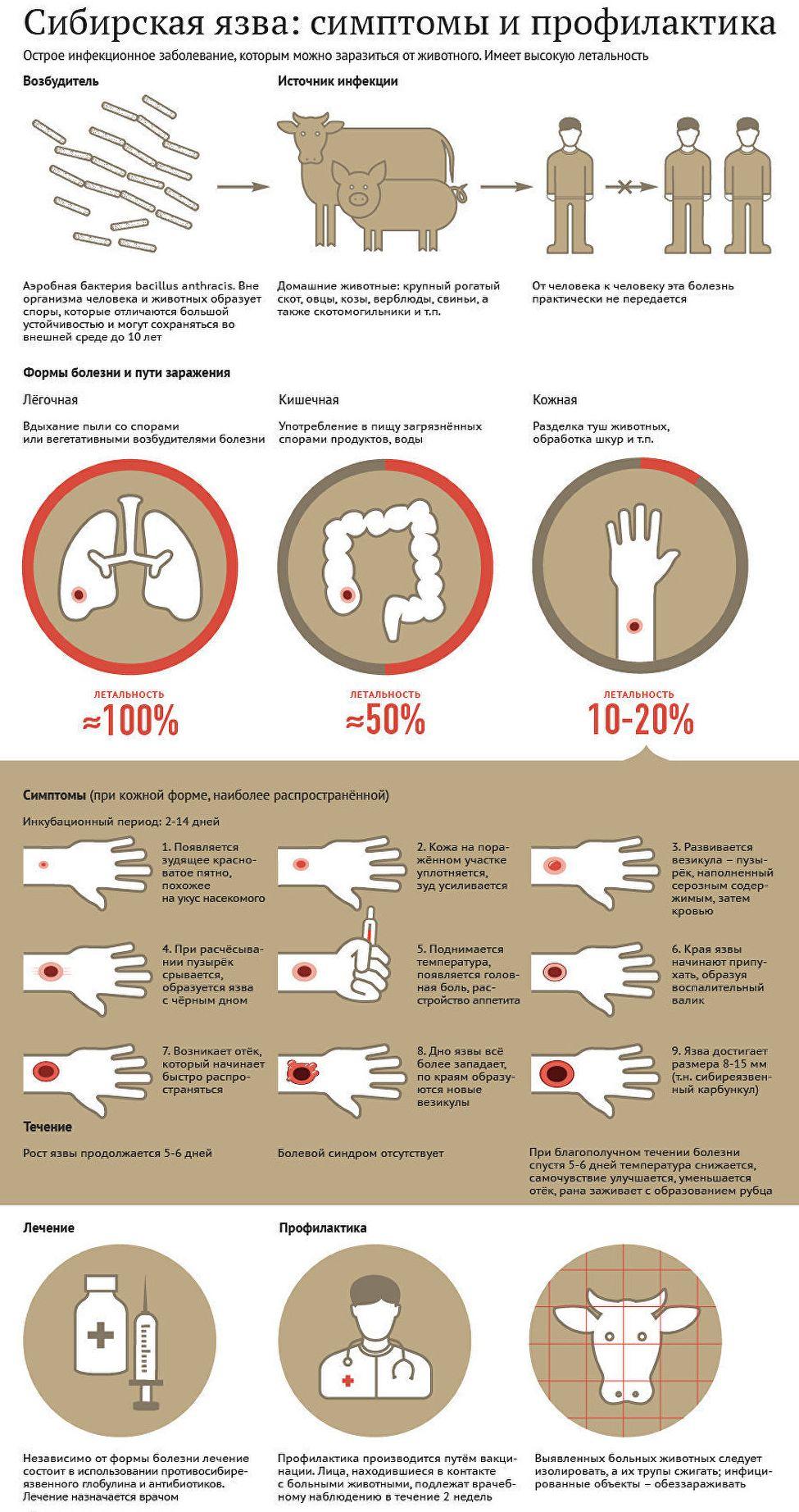 Диагностика сибирской язвы у человека