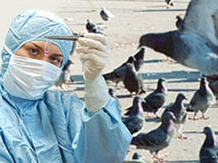 можно подобрать может ли вылечить врач-ветеринар дикого голубя в ростове белье