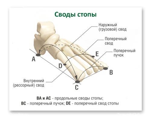 Классификация плоскостопия