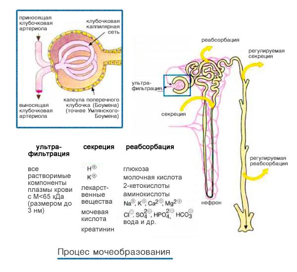 симптомы несахарного диабета у женщины