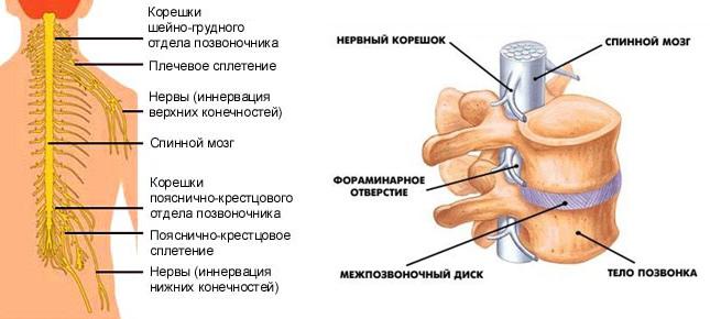 Грыжа шейного отдела доктора бубновского