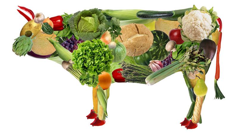 -вегетарианства-e1445406007970