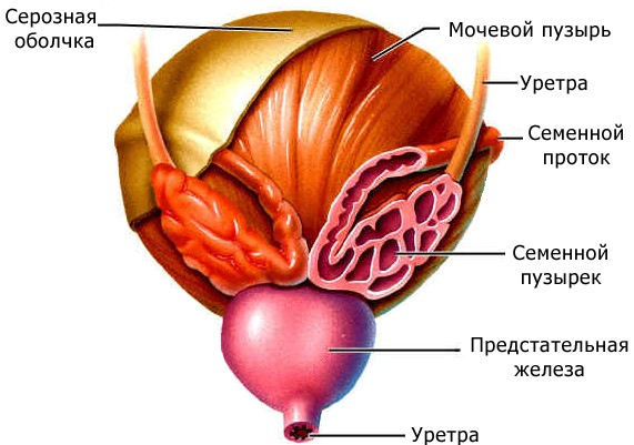 Причины везикулита у мужчин