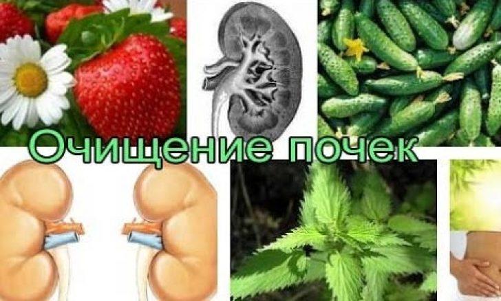 Лечебные диеты при заболевании почек