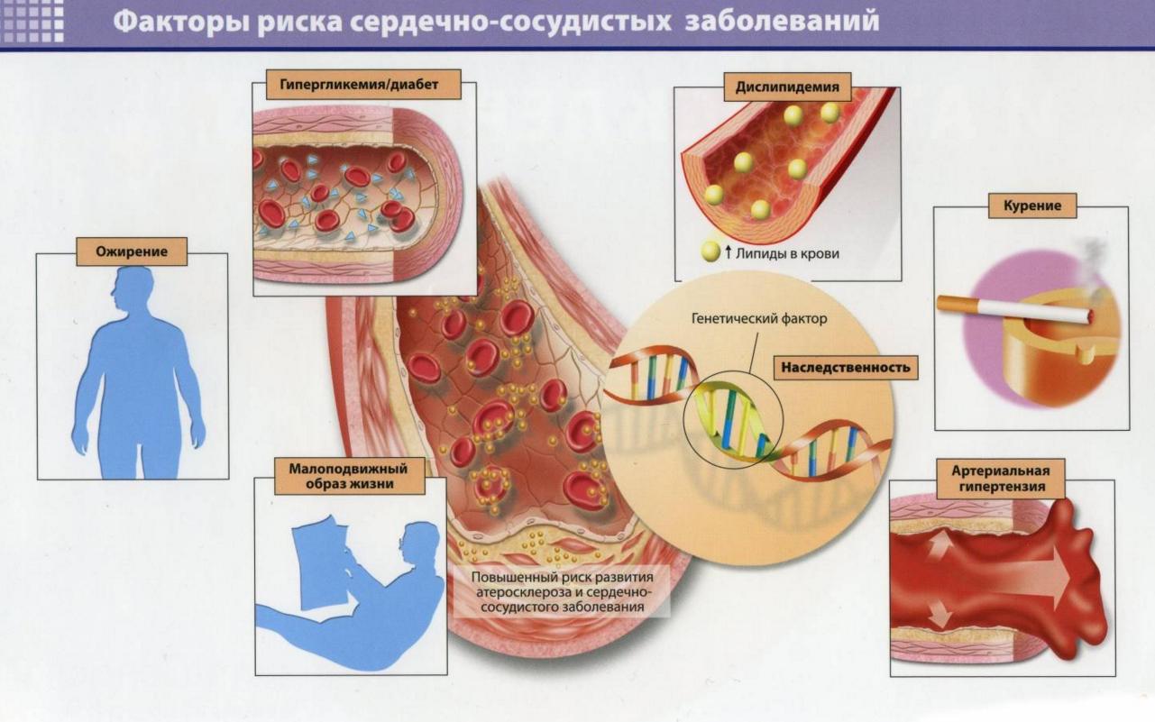 Препараты уменьшения холестерина