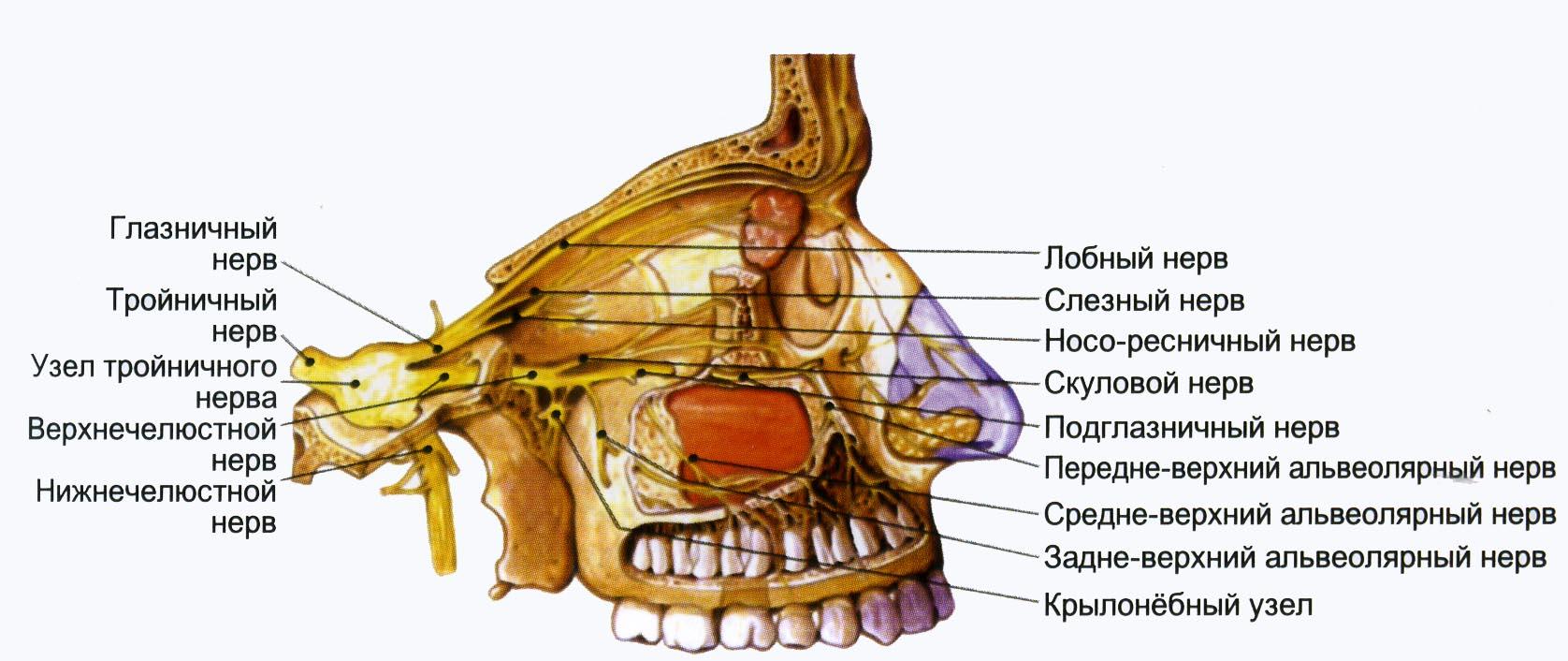 Невралгия крылонебного узла