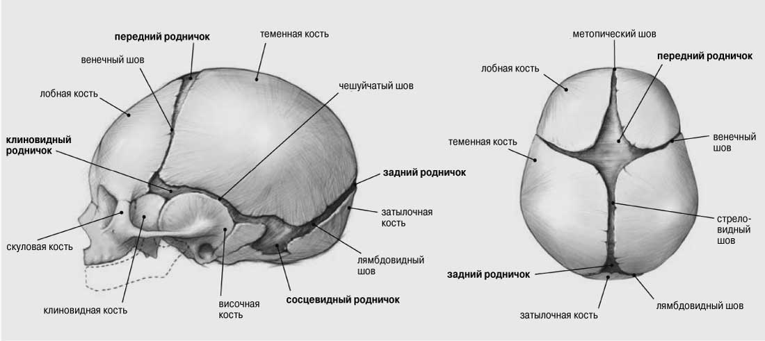 Шов Сагиттальный