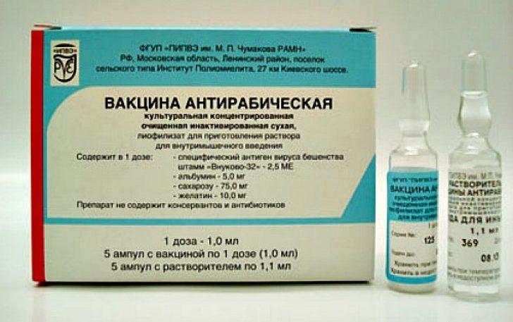 Как сделать человеку прививку от бешенства