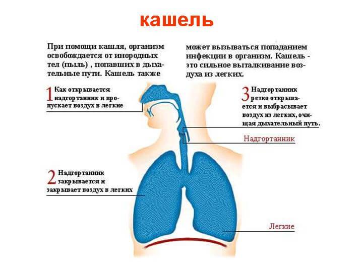 У ребенка кашель причины