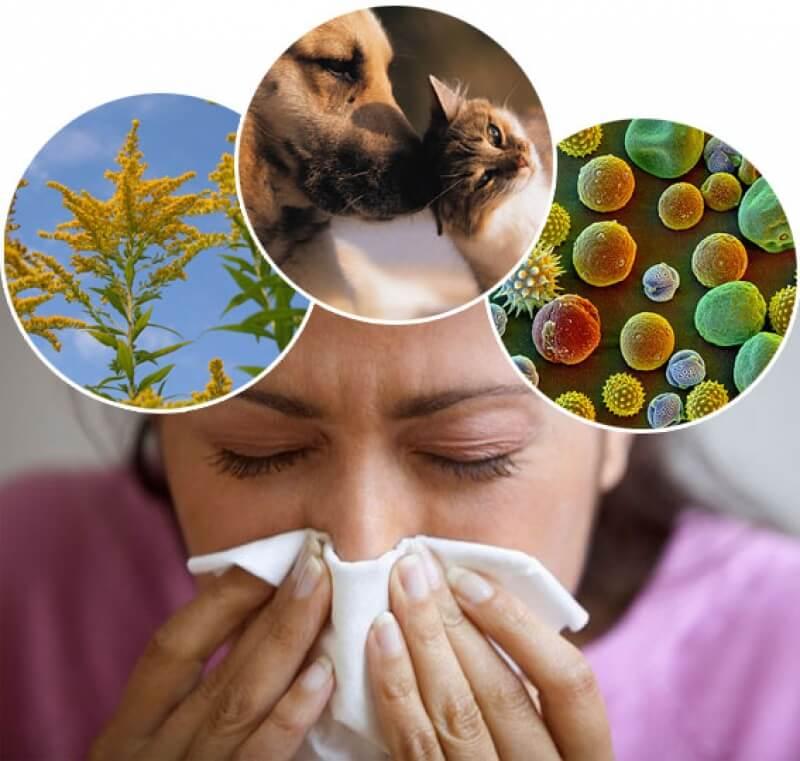 аллергия причины симптомы лечение