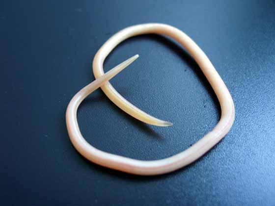 лечение паразитов дольками чеснока