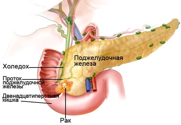 rak podsheludka