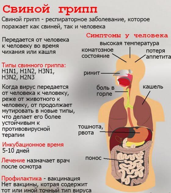svinoj-gripp-1