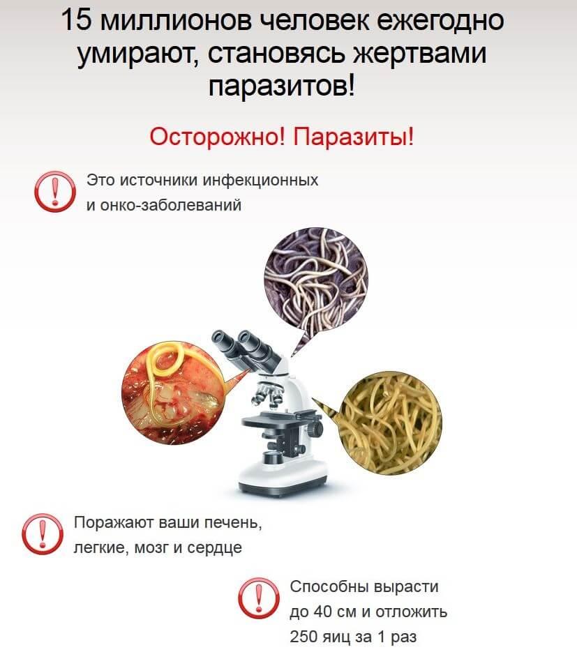 овощи от гельминтов