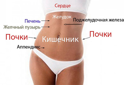 kak-raspolozheny-vnutrennie-organy