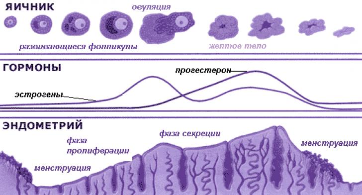 Нарушение менструального цикла лечить