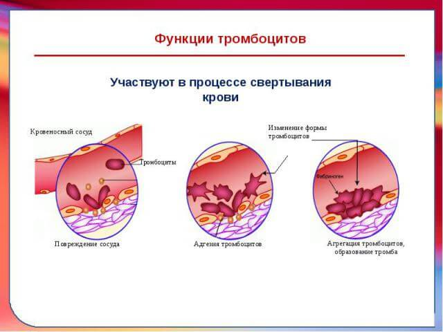 agregaciya-trombocitov