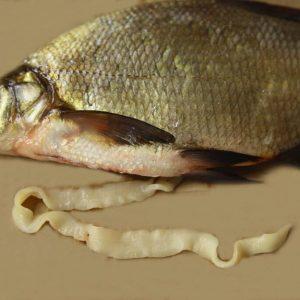 parazity v rybe