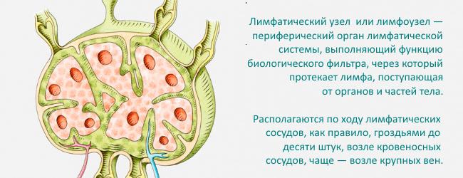 uvelichenie-limfaticheskih-uzlov-2