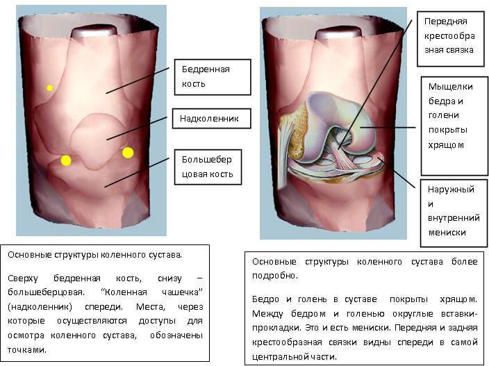 bolit koleno