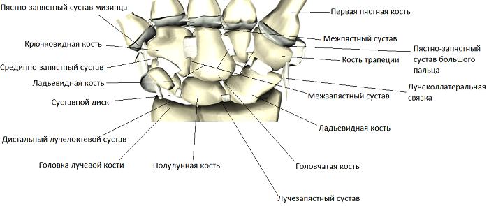 luchezapjastnyj-mezhzapjastnye-pjastnozapjastnye-i-mezhpjastnye-sustavy-