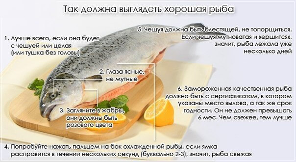 vybiraem-rybu