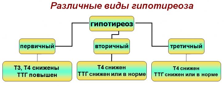 shitovidnaya sheleza