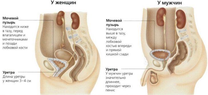 Боли при мочеиспускании у женщин: причины боли, жжения, рези при мочеиспускании