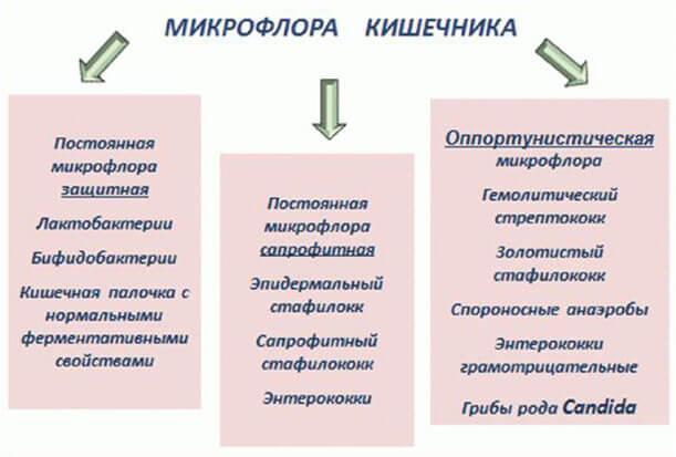 микробиологические методы исследования дисбиоза влагалища-ьр3