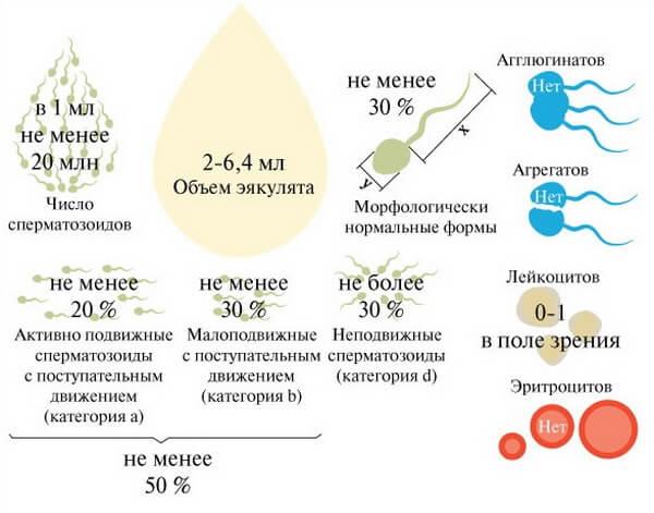 Показатели нормы спермы